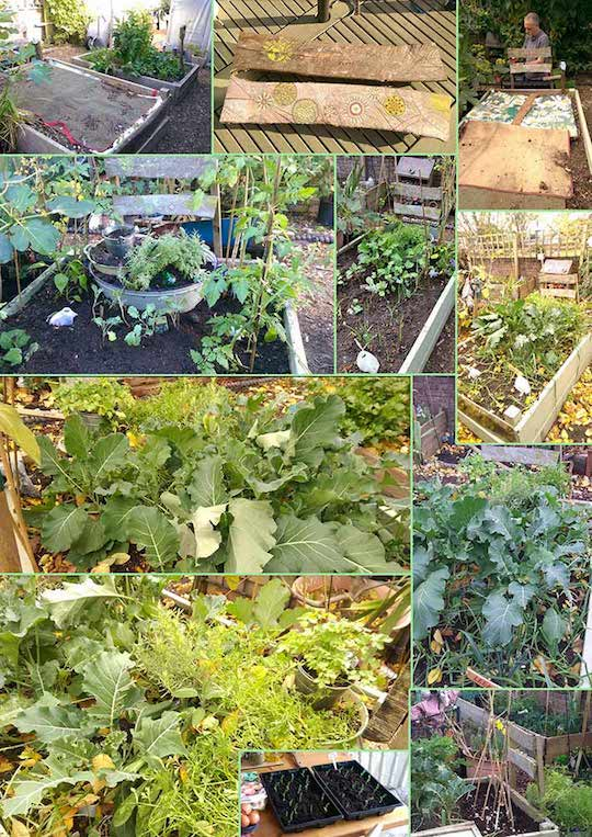 Southsea Green vegetable plot collage
